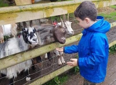 a boy wearing a blue jacket feeding goats at Children's Adventure Farm Trust